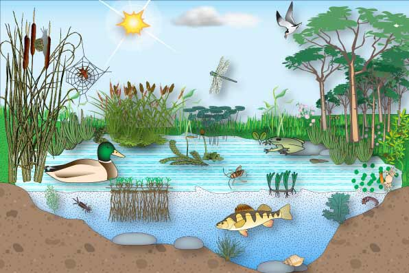 Teaching Kids About Ecosystems – Science Mom